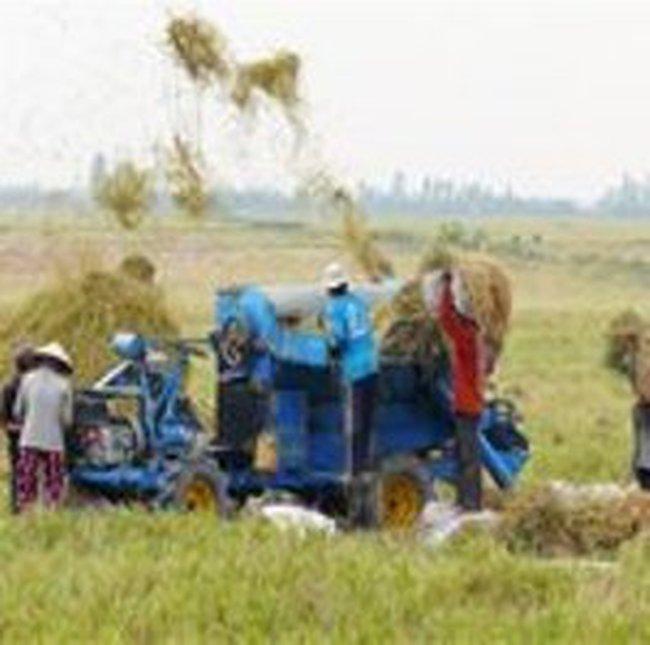 Việt Nam sẽ tăng sản lượng gạo đồ
