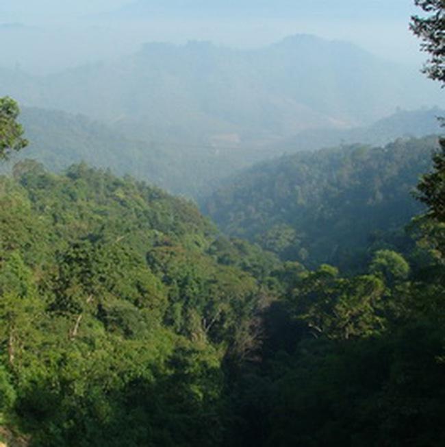 Doanh nghiệp nước ngoài thuê đất rừng giá 180.000 đồng/ha