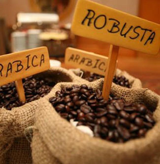 Xuất khẩu cà phê đạt kế hoạch nhưng doanh nghiệp lỗ