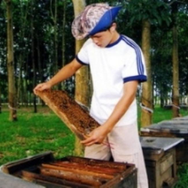 Việt Nam là một trong 10 nước xuất khẩu mật ong lớn nhất thế giới
