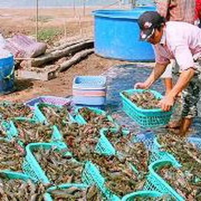 10 năm tới, thủy sản tăng trưởng nhờ sản phẩm chủ lực nào?
