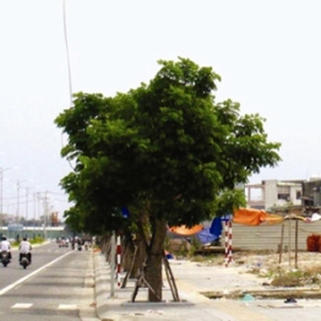 Đà Nẵng quy định giá đất tái định cư tại một số khu trên địa bàn thành phố