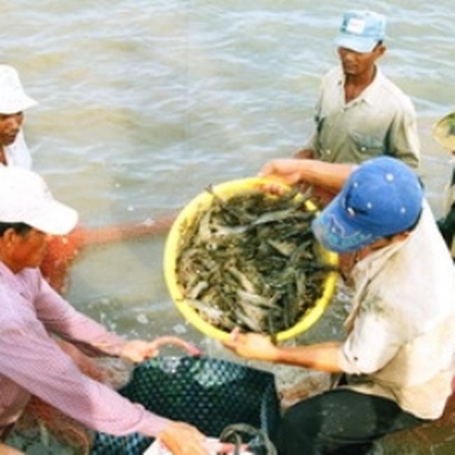 Nguyên liệu thủy sản: Cần giải pháp căn cơ