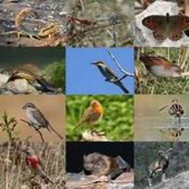 Vay ADB 30 triệu USD cho Dự án bảo tồn đa dạng sinh học Tiểu vùng Mê Kông