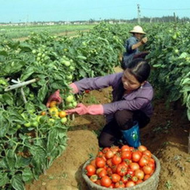 Việt Nam có nguy cơ rơi vào bẫy thu nhập trung bình