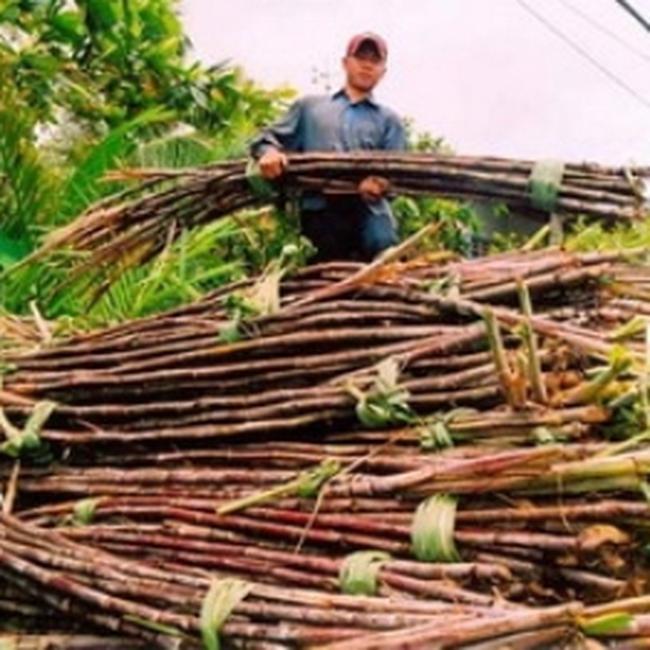 Xây dựng chiến lược cho ngành mía đường