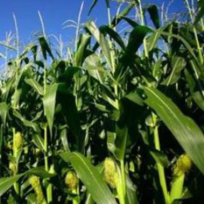 Phê duyệt 4 dự án phát triển nông nghiệp