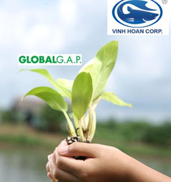 VHC: Thêm 3 vùng nuôi đạt chứng nhận Global GAP