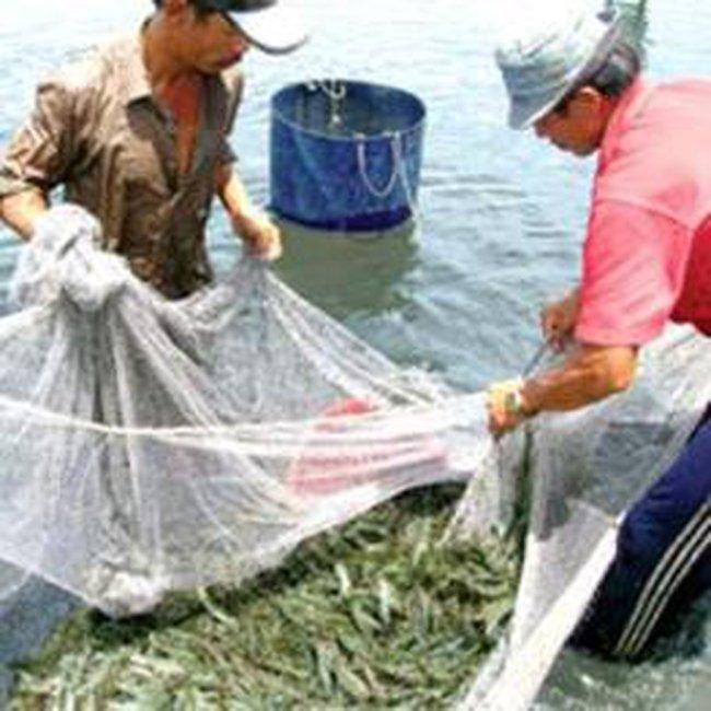 Đẩy mạnh xuất tôm, cá tra sang Australia