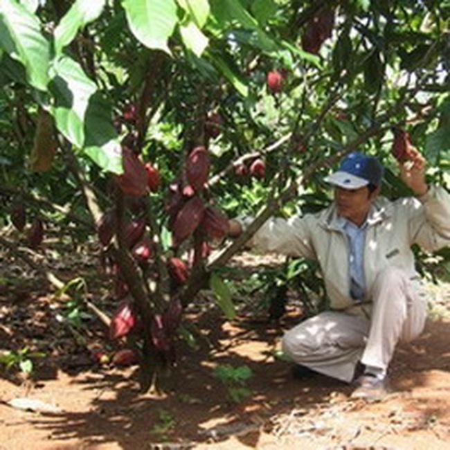 2010: Nông dân Tây nguyên bội thu nhờ được giá