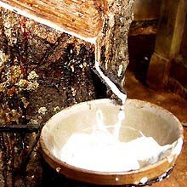 ANRPC: Cung cao su thế giới thắt chặt trong giai đoạn tháng 2 – tháng 5/2011