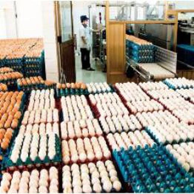 Trứng gia cầm của Việt Nam có thể bị cấm nhập vào Hong Kong