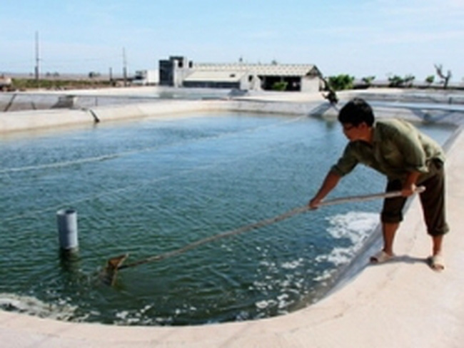Tôm cá được giá, nhiều hộ mở rộng diện tích nuôi