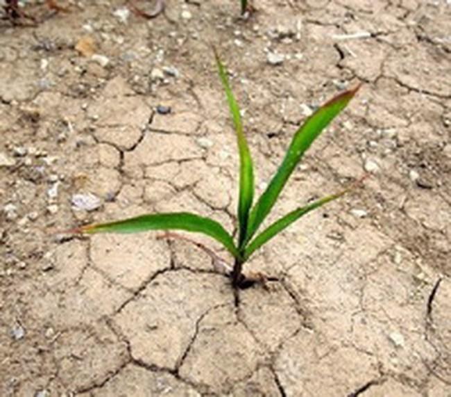 Mỗi năm mất 850 triệu đô la vì biến đổi khí hậu