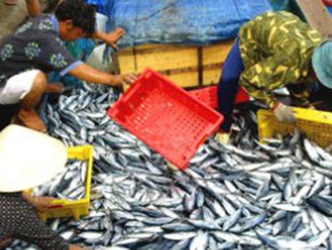 Kinh doanh thủy sản Nhật Bản đình trệ sau trận động đất