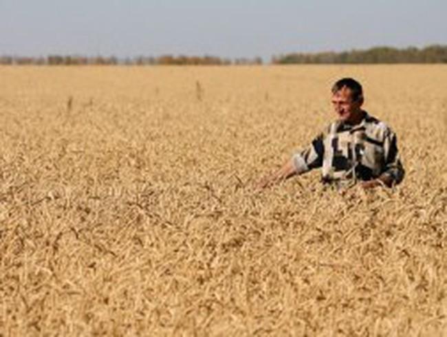 Động đất ở ĐNA có thể làm giảm sản lượng lúa mạch và gạo