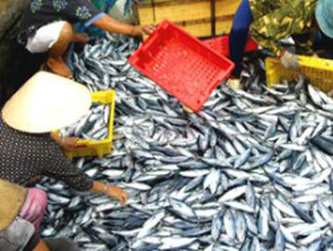 Thêm 53 doanh nghiệp thủy sản được phép xuất khẩu sang EU
