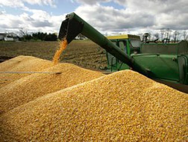 Giá ngô cao nhất kể từ khủng hoảng lương thực 2008