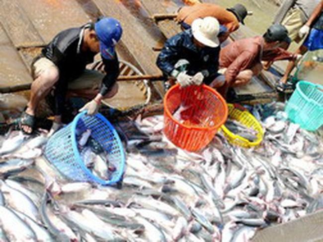 Vasep gặp WWF bàn về hướng phát triển cá tra
