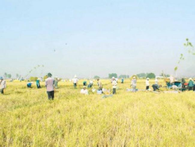 Bảo vệ thực vật An Giang dự kiến niêm yết tại HoSE trong Q2