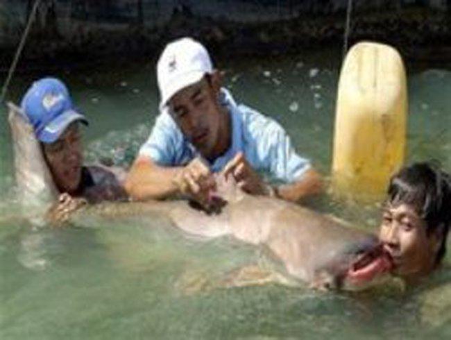 Đập Xayaburi sẽ tổn hại các loài cá trên sông Mê Kông