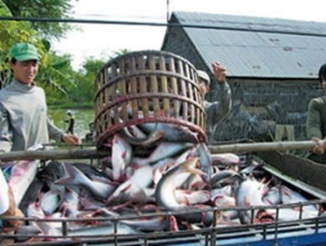 Lấy ý kiến cộng đồng bảo vệ cá tra Việt Nam