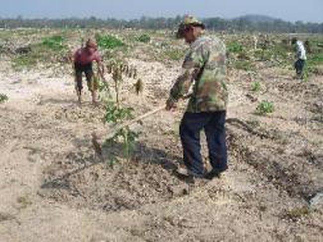 Chấn chỉnh trồng mới cao su