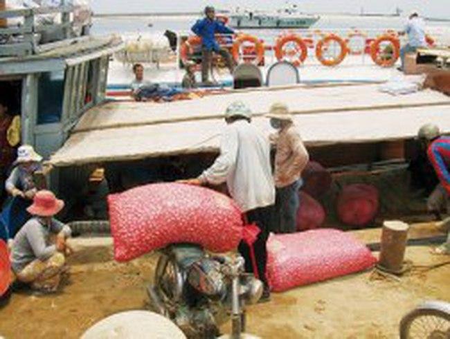 """Chở tỏi """"dỏm"""" ra đảo Lý Sơn"""