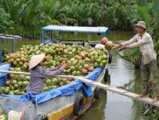 Xuất khẩu dừa nguyên liệu sẽ phải chịu thuế 3%