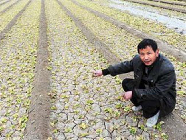 Khủng hoảng lương thực - Cơn ác mộng của Trung Quốc