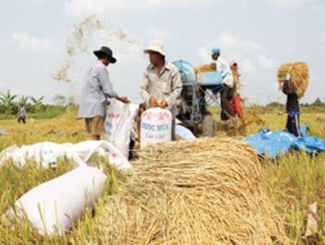 Gần 105 tỷ đồng cho dự án nông nghiệp cấp bách