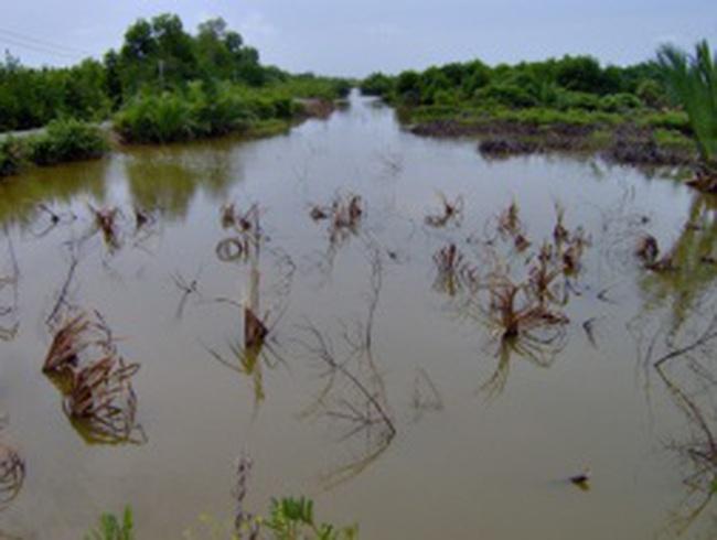 Chưa có đập thủy điện, nhà nông ĐBSCL đã lo hết nước