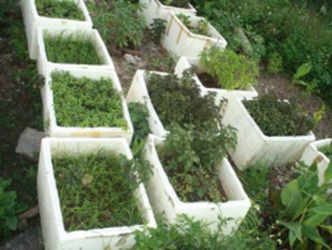 Trào lưu tự trồng rau thời bão giá