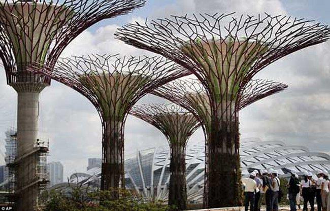 Rừng cây bê tông và kim loại đầu tiên trên thế giới