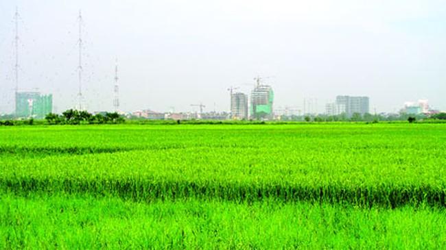 """Hà Nội: Đất nông nghiệp """"ngắc ngoải"""" vì dự án"""
