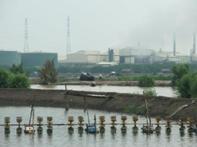 Đồng Nai: Khoảng 450 hécta ao nuôi tôm bỏ trống