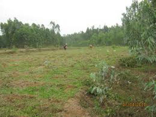 Đất có cây xanh: Phải hỏi ý kiến mới được cấp phép xây dựng