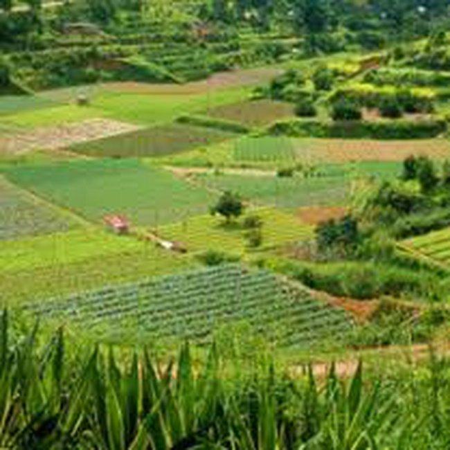 Hà Nội: Tiền thuế đất nông nghiệp sẽ.... quy ra thóc