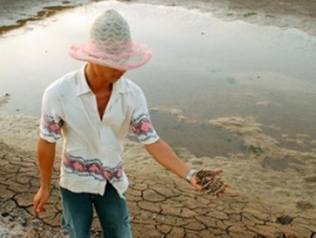 Tôm ở Bạc Liêu chết hàng loạt do độc tố trong ao