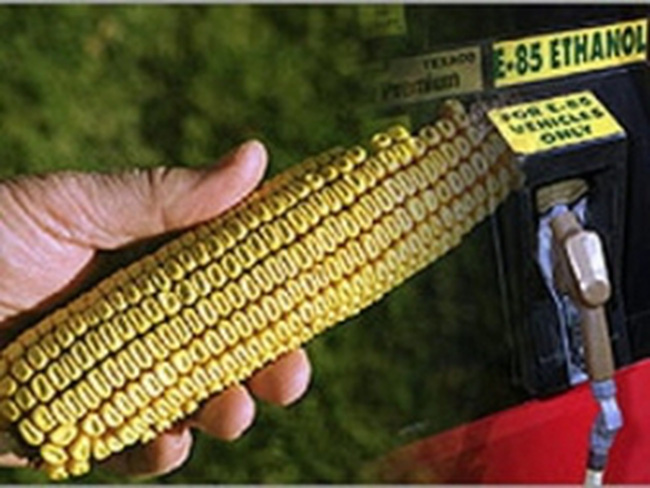 Nhiên liệu sinh học làm khủng hoảng lương thực