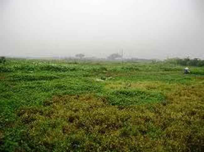 Làm sao để hạn chế tình trạng nhiều KCN bỏ hoang?