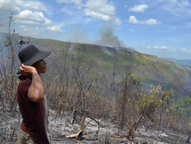 TTF: Bị cháy 91,5 ha rừng tại Phú Yên
