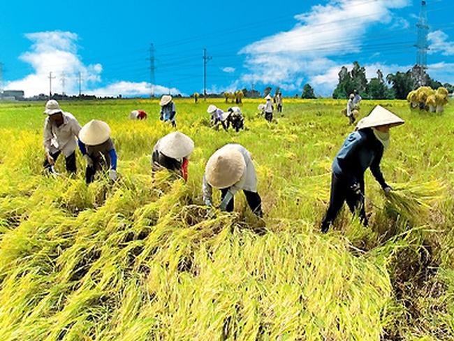 FT: Tập đoàn đa quốc gia tranh nhau thị trường nông thôn tại Việt Nam