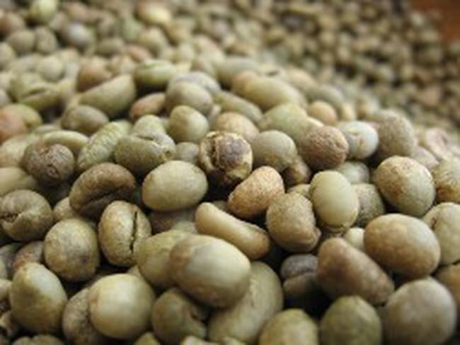 Giá cà phê arabica thấp nhất 6 tháng
