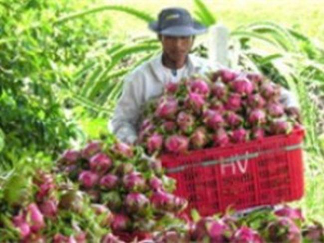 Xuất khẩu rau quả sẽ mang về 500 triệu USD