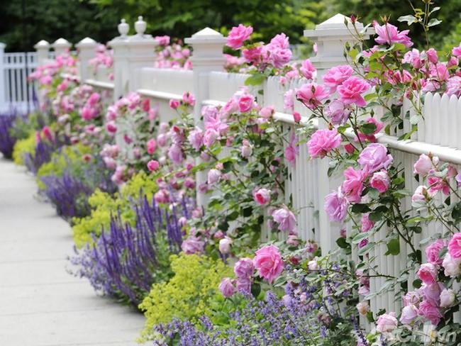 Sắc hoa rực rỡ lối vào nhà