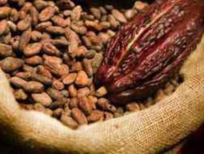 Bến Tre: Giá dừa khô và hạt ca cao tăng giá