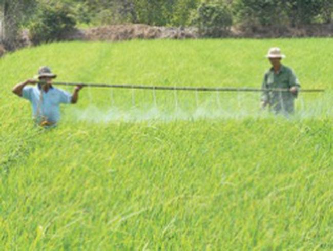 Thí điểm bảo hiểm nông nghiệp, thấp thỏm chờ chính sách!