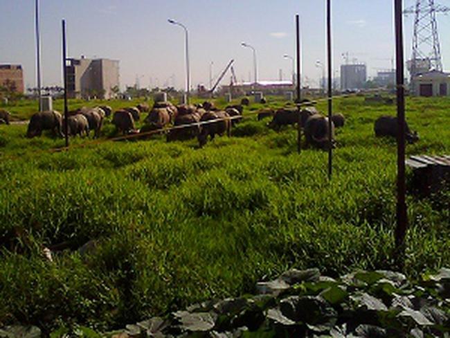 Quy hoạch đất đô thị: Mạnh ai nấy làm