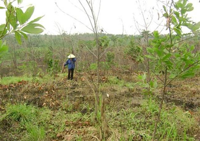 Đắk Lắk: Dân trồng cây đợi đền bù